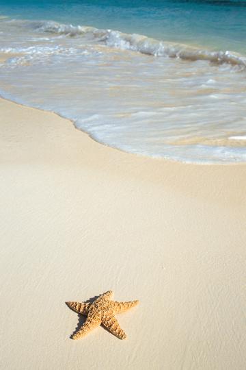 stella marina sulla spiaggia