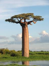 STORIE SOTTO IL BAOBAB